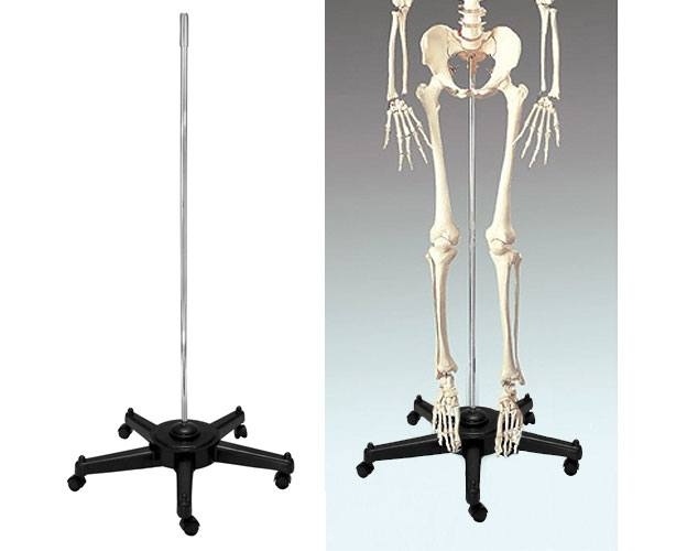Anatomical World Wide Bucky Skeleton Replacement Stand