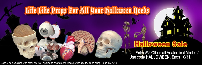 Sale on Anatomical Models for Halloween